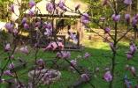 szwajcarka-magnolia-i-ognisko